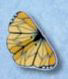 1107 Monarch Butterfly - Just Another Button Co