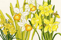 Daffodil Blooms Kit