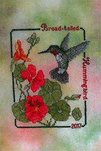 2017 Broad-Tailed Hummingbird