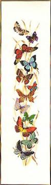 Butterflies Galore Kit