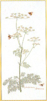 Bees and Queen Ann's Lace Kit