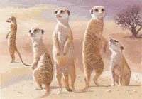 Power & Grace- Meerkats