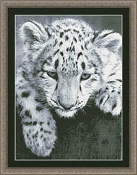 Black and White Snow Leopard Cub