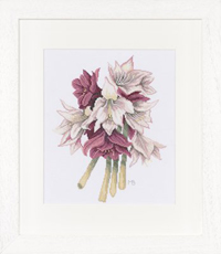 Amaryllis Bouquet Kit by Marjolein Bastin