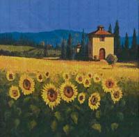 A Sunflower Vantage