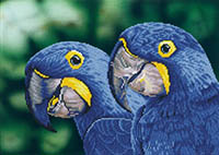 Blue Hyacinth Macaws -  Diamond Dotz Kit