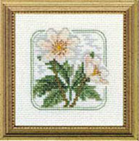 Carolyn's Meadow -Wood Anemone Kit
