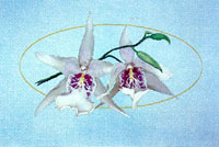 1-2-3 Orchid