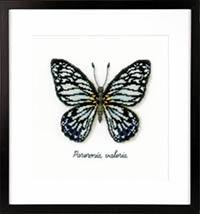 Blue Butterfly Kit