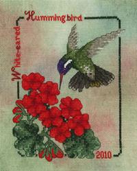 2010 White-Eared Hummingbird