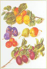 Assortment of Fruit Kit
