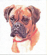 Boxer Dog Portrait Kit