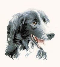 Animal Portraits - Todd