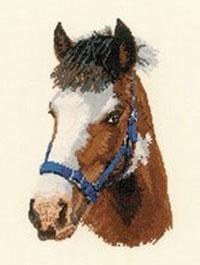 Animal Portrait - Troy