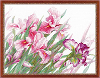 Irises Kit