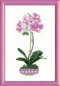Lilac Orchid Kit