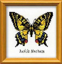 Bee Happy - Swallowtail Butterfly Kit